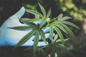 marijuana arrest lawyer